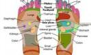 מפת ייצוג האיברים לפי שיטת רפלקסולוגיה. מקור: ויקיפדיה ברשיון שימוש cc3-by-sa. איור:Jundubz
